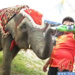 Qingdao Beer Festival Elephant